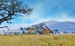 Serengeti ørkenen