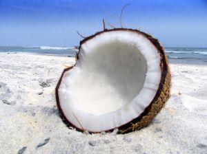 kokosnød på kovalam stranden