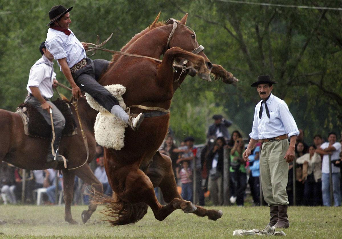 En gaucho ridder en utæmmet hest i San Antonio de Areco