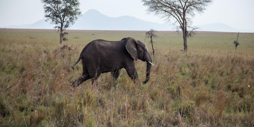 Læs om tre helt fantastiske safarirejser i Afrika!